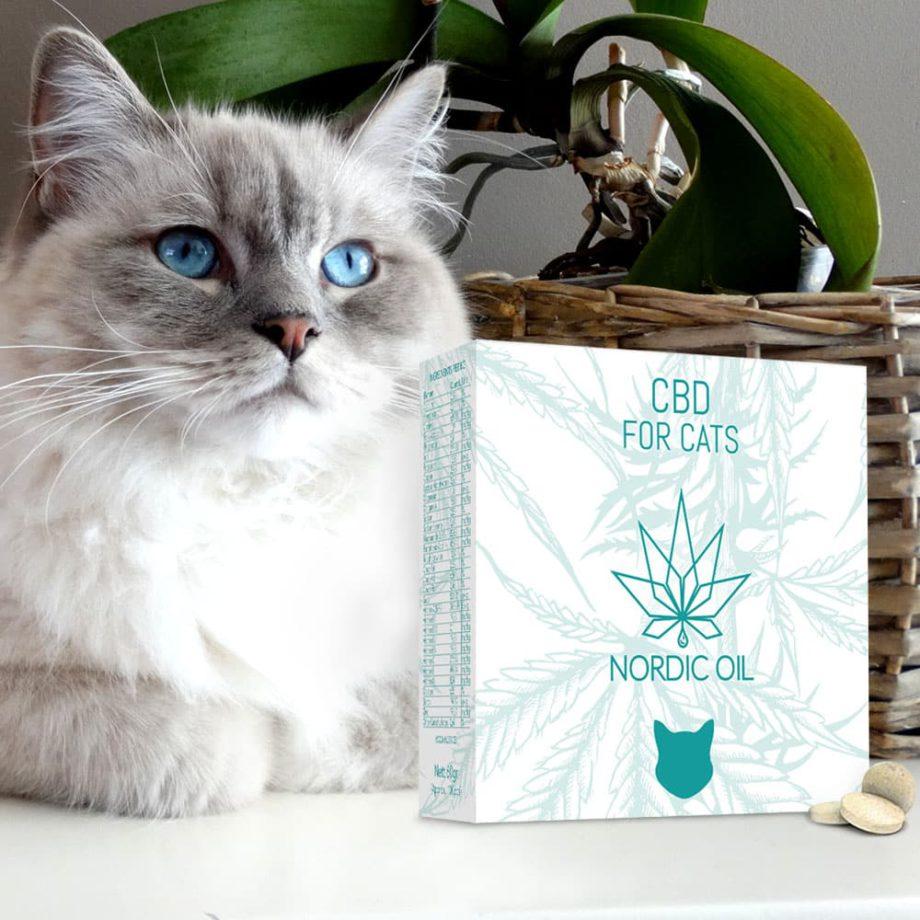 CBD-Tabletter För Katter