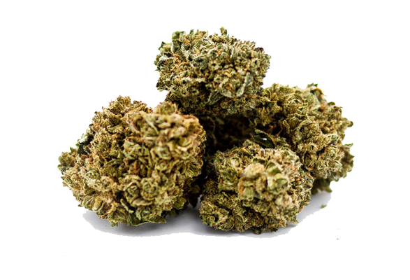 Pineapple Express – Premium CBD Buds